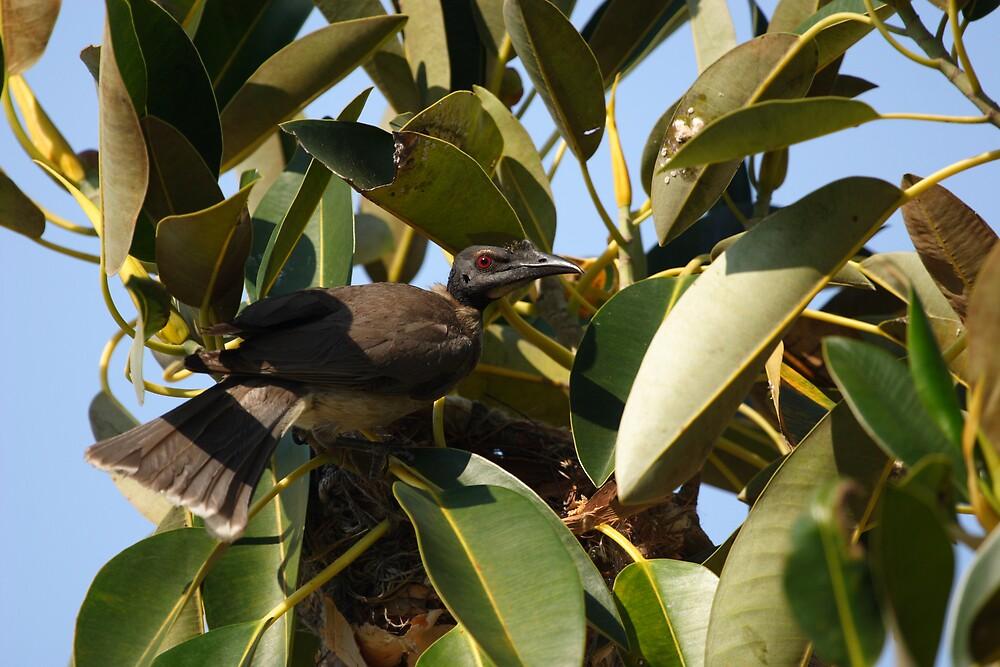 Nesting Friar by kerryedward