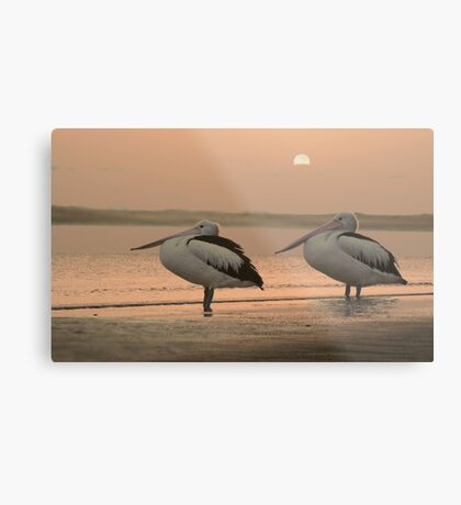 Pelican Sunrise Metal Print