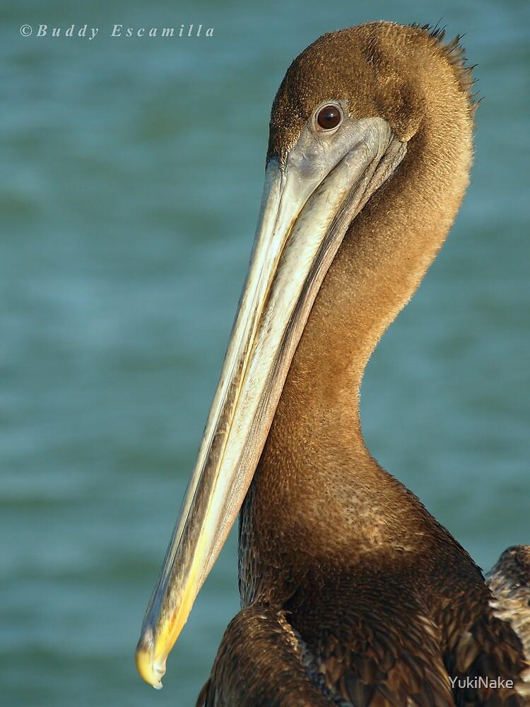 Pelican by YukiNake