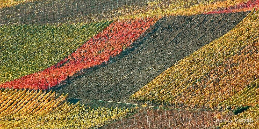 vineyard #2 by Erwin G. Kotzab
