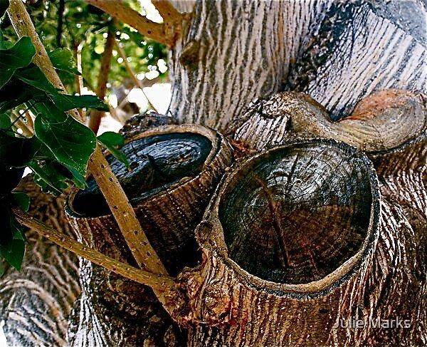 Bongo Tree by Julie Marks