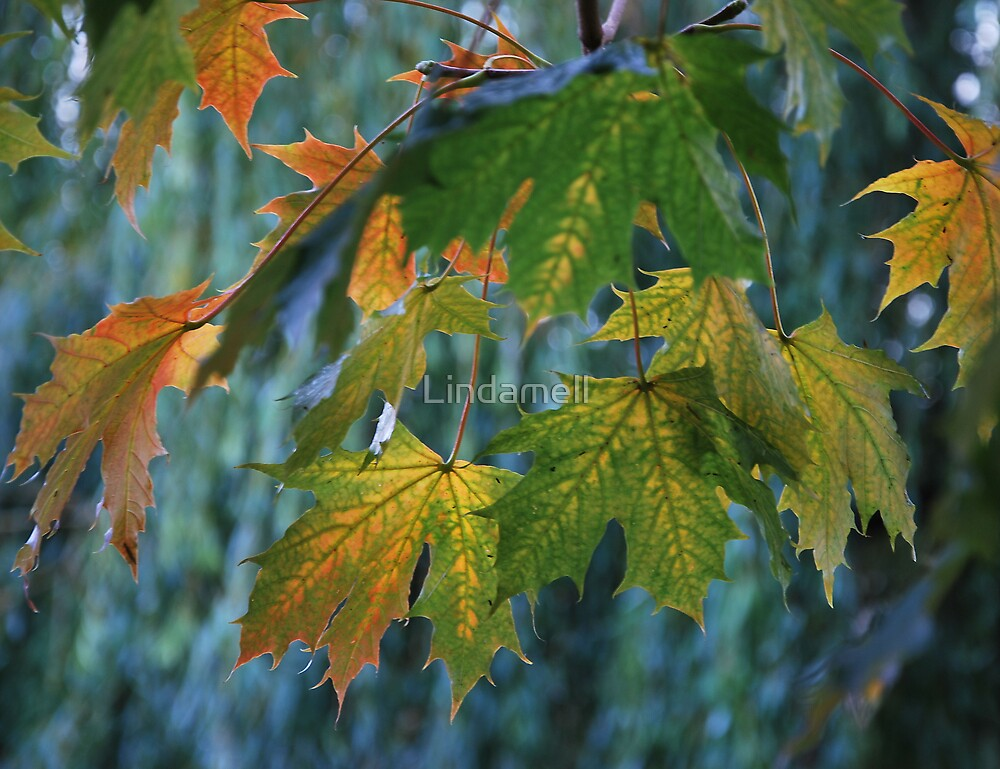 Colours of Autumn by Lindamell