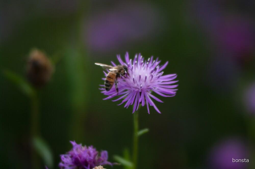 Bee on flower by bonsta