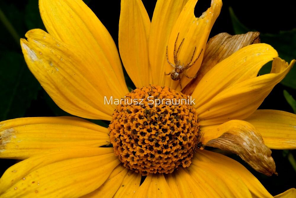 Welcome to my flower by Mariusz Sprawnik