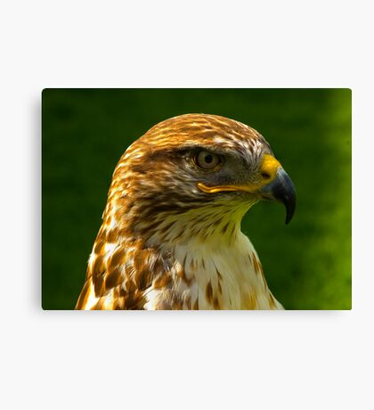On Guard Canvas Print