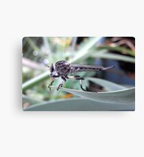 backyard beastie Canvas Print