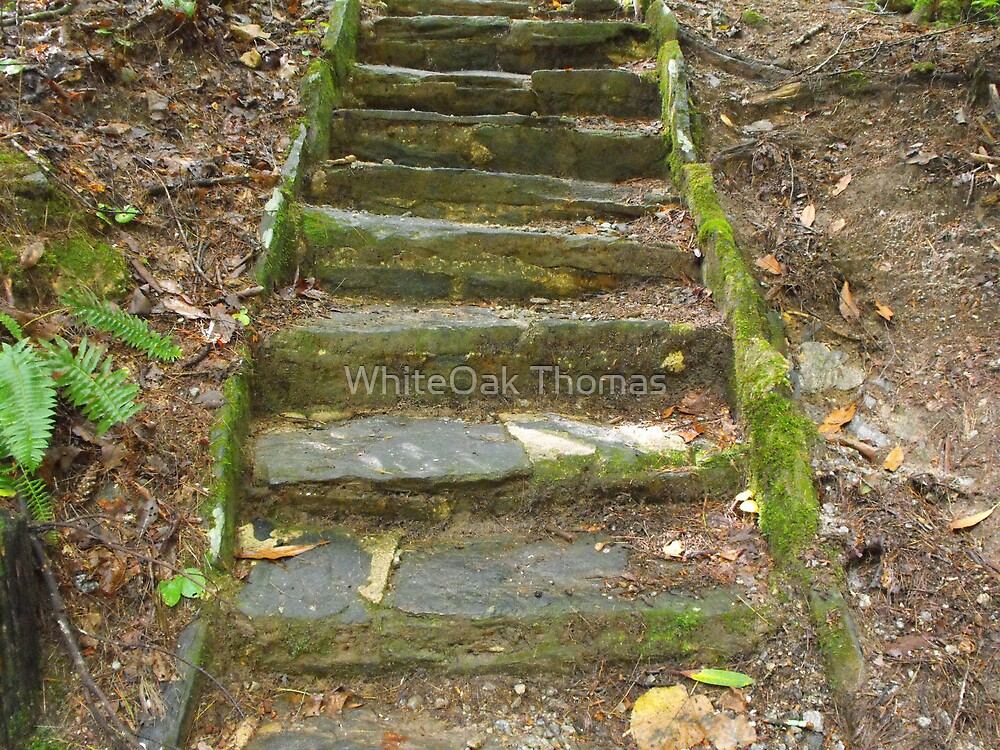 Step Into My World by WhiteOak Thomas