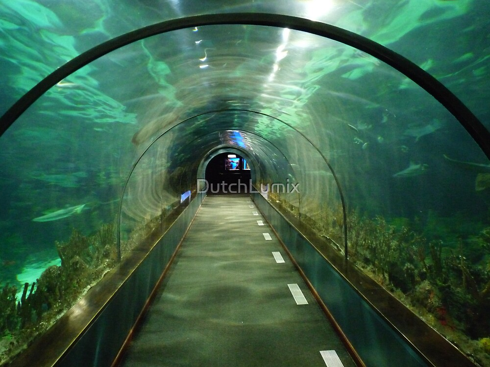 Fish tank tunnel by DutchLumix