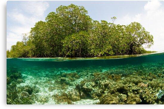 Raja Ampat Mangroves by muzy