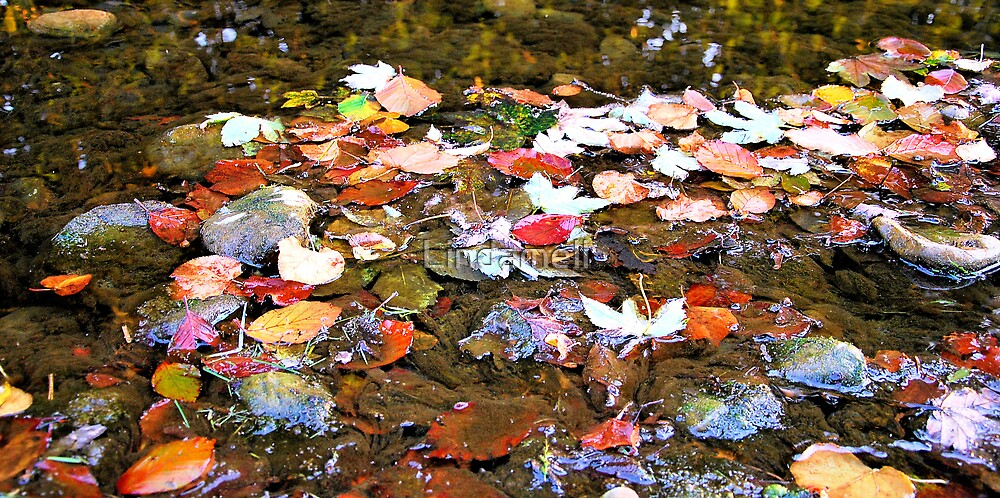 Fallen leaves in the beck. by Lindamell