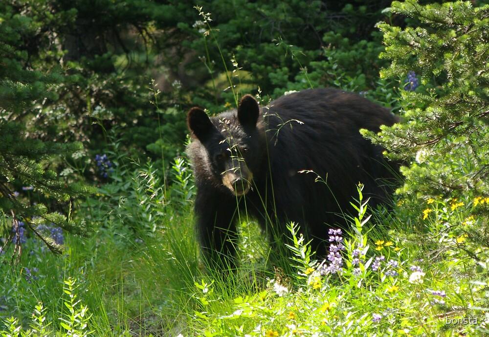 Black bear on Mt Ranier by bonsta