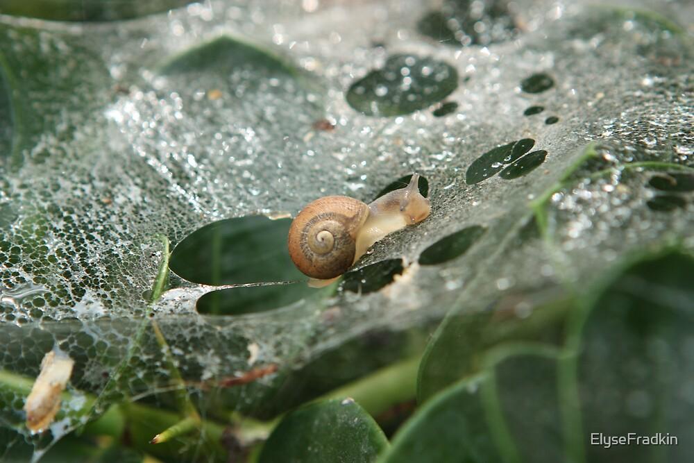 Snail Caught on a Web by ElyseFradkin