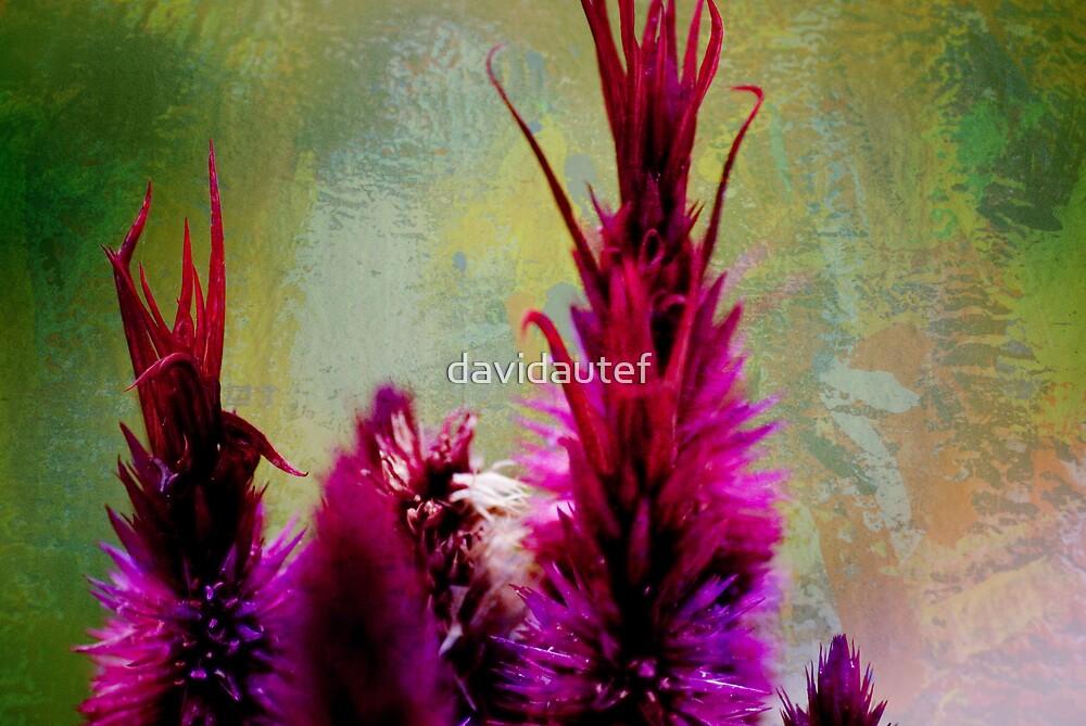 red flower by davidautef