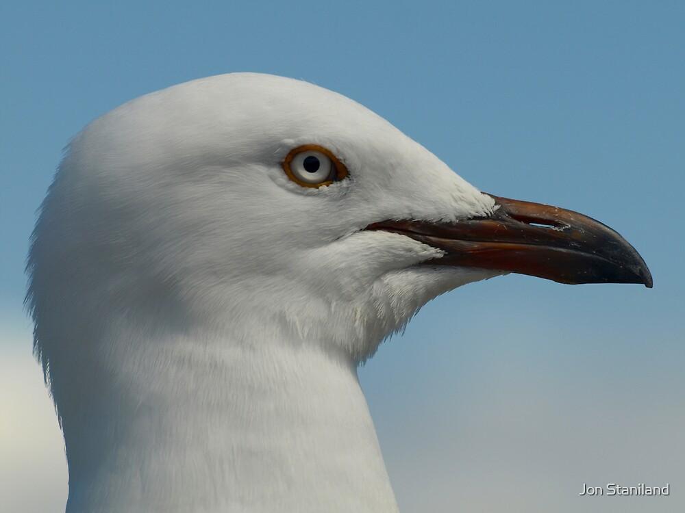 Seagull II by Jon Staniland