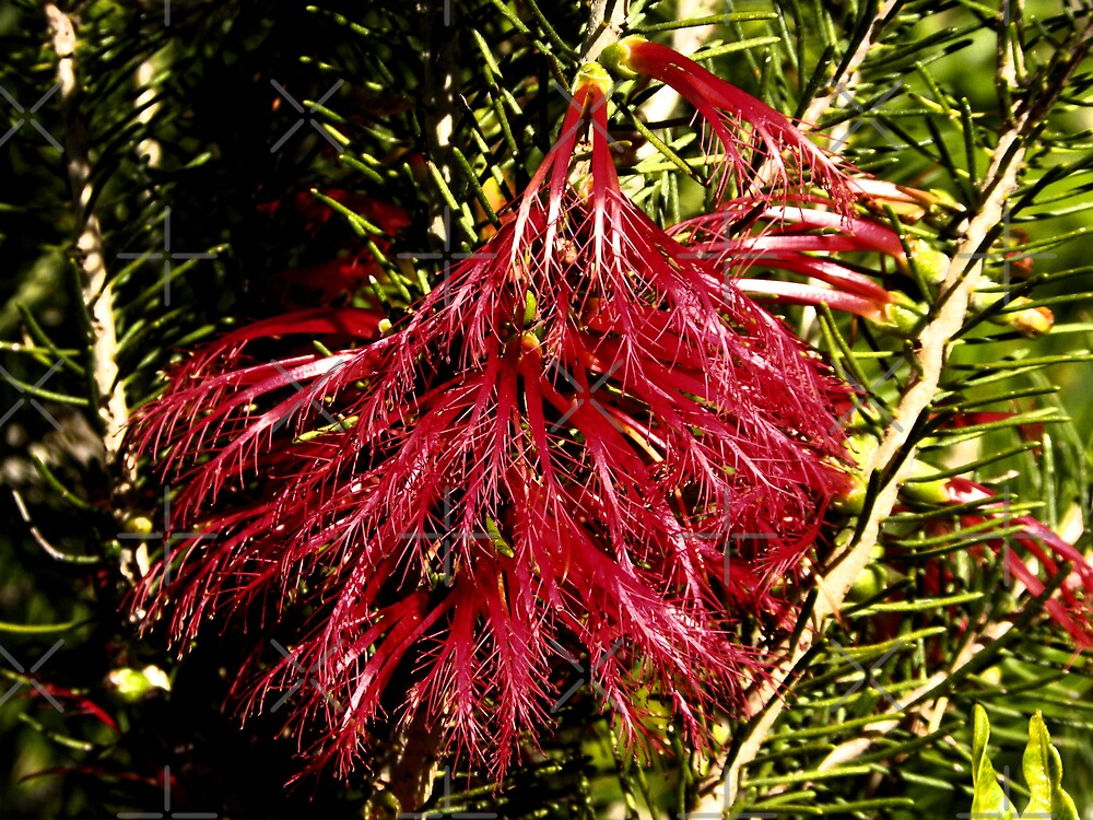 One sided Bottle Brush by TeAnne