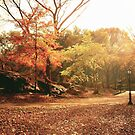Light Through Autumn Trees - Central Park by Vivienne Gucwa
