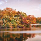 Autumn Colors Central Park New York City by Vivienne Gucwa