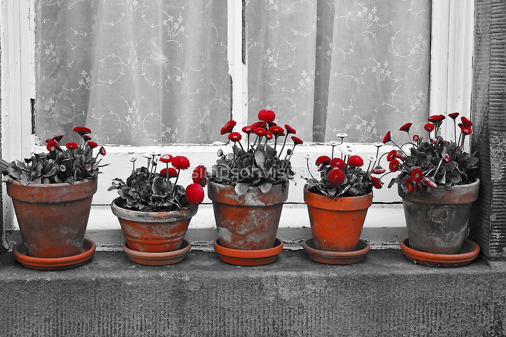 Pot Plants on a Window Sill by simpsonvisuals