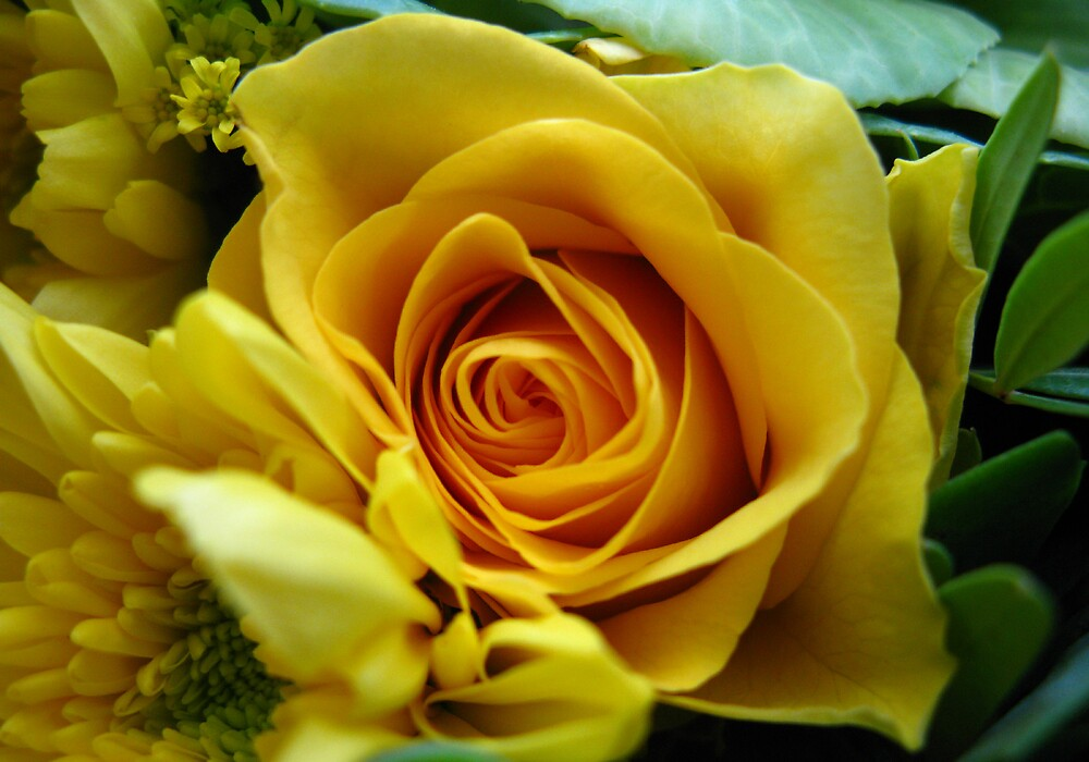 Yellow Rose One by Yvonne Carsley
