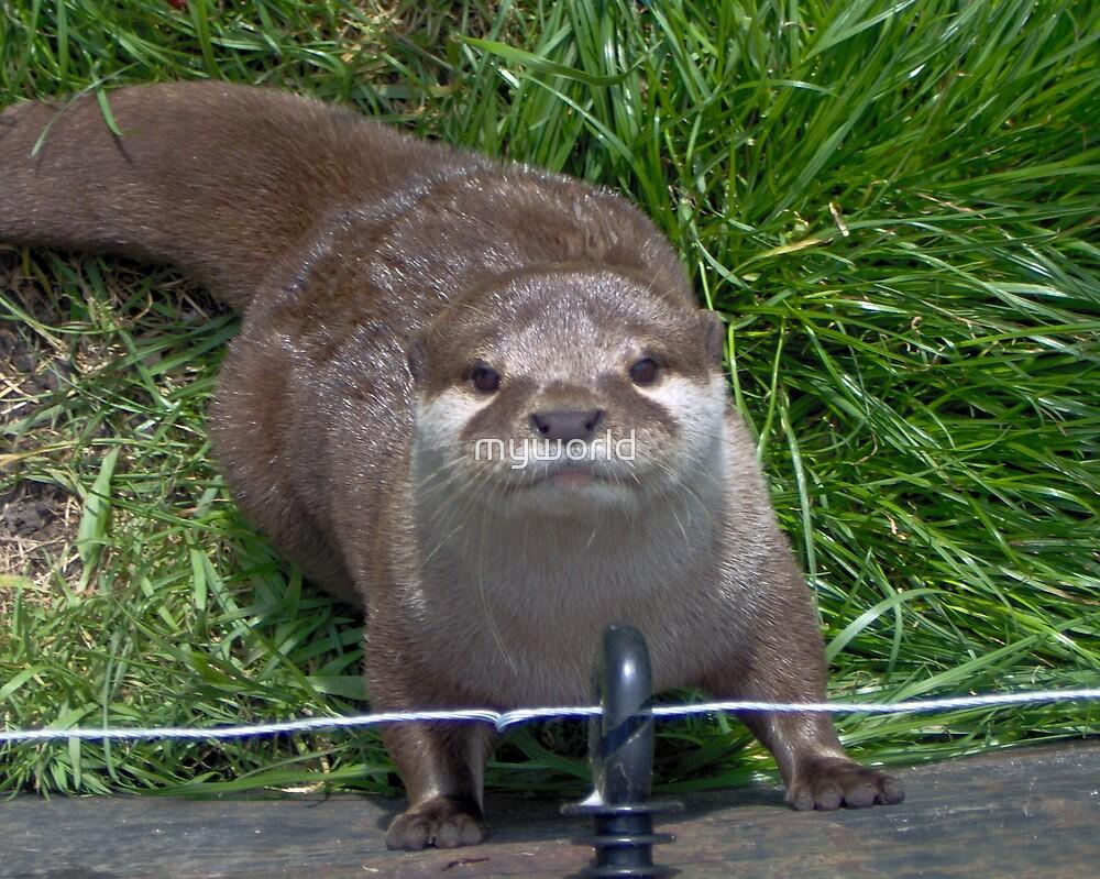 otter otter otter by myworld