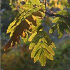 goldenes Licht von agnessa38