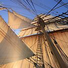 Morning Sails by Lucy Hollis