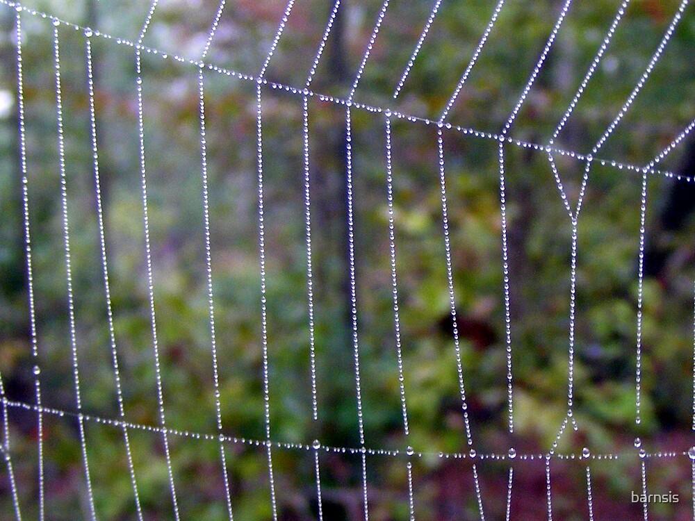 Behind Natures Bars by barnsis