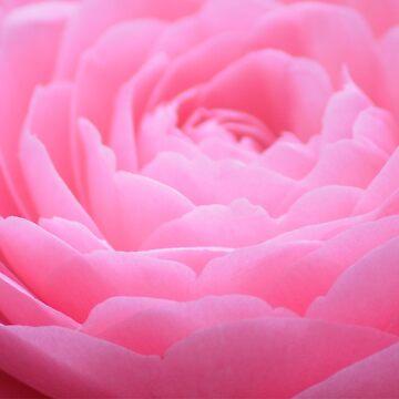 pinkness by lizdomett