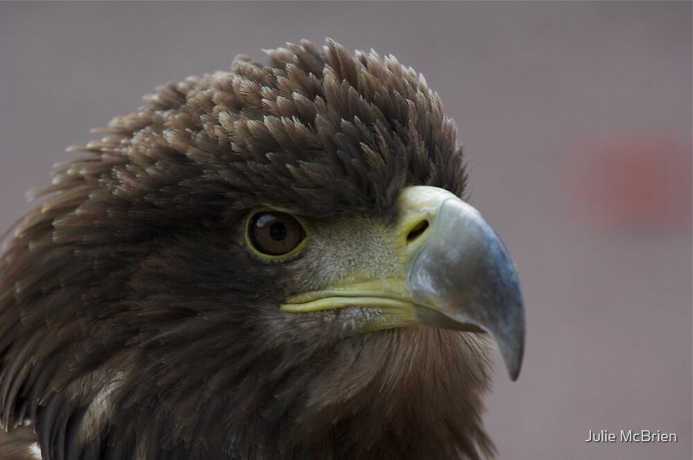 Sea Eagle by Julie McBrien