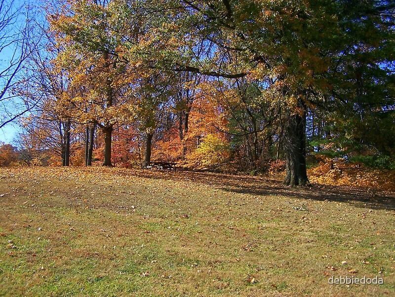 Fall Trees by debbiedoda