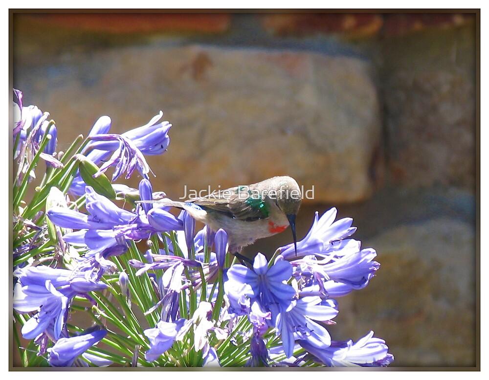 Hummingbird & Blue Ball Flower by Jackie Barefield