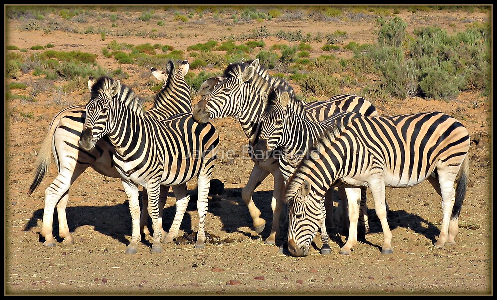 How Many Zebras? by Jackie Barefield