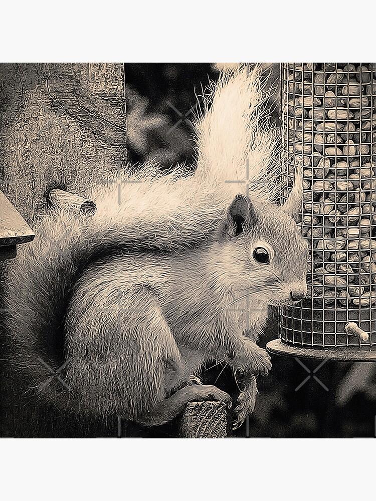 Squirrel in the Garden by BethsdaleArt