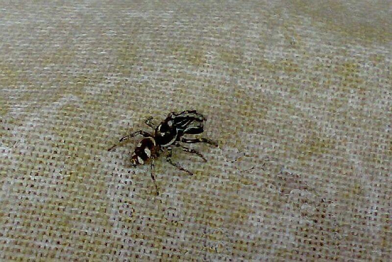 SPIDER by nneri12