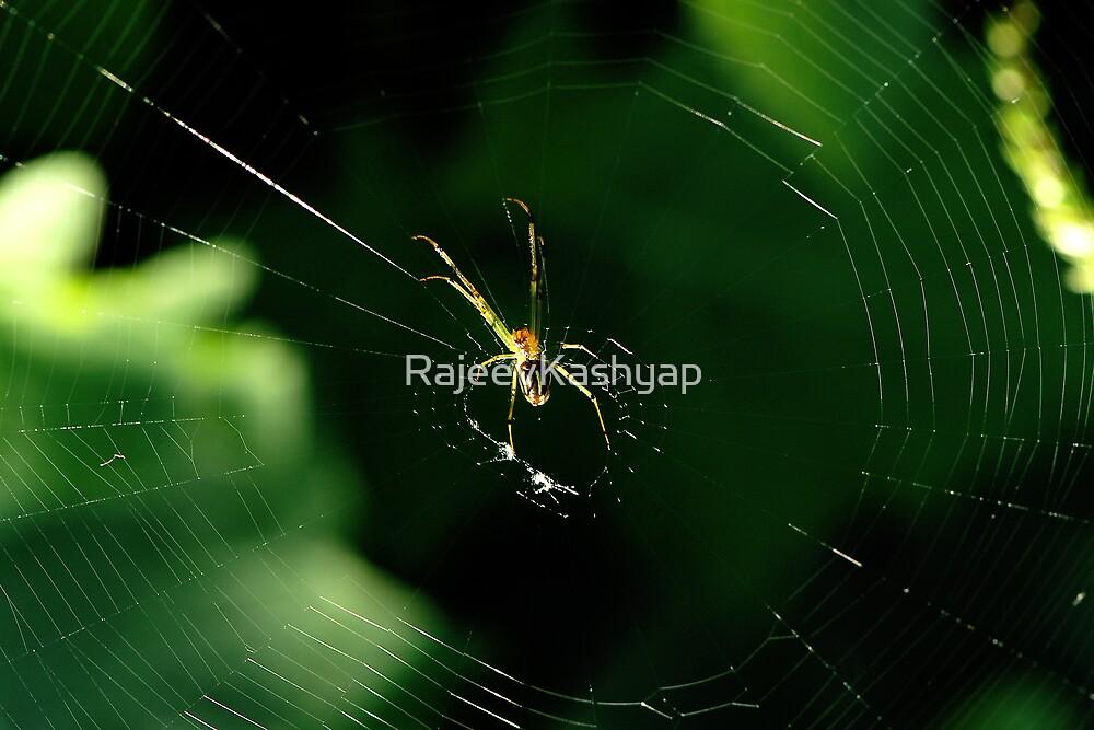 Spider by RajeevKashyap