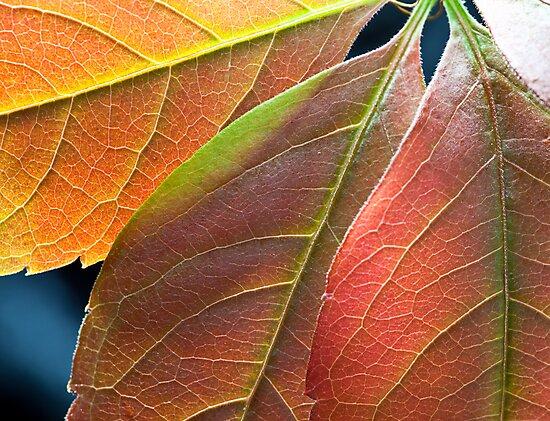 Autumn leaves by Maska