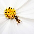 Dining al fresco - insect on flower by Agnes McGuinness