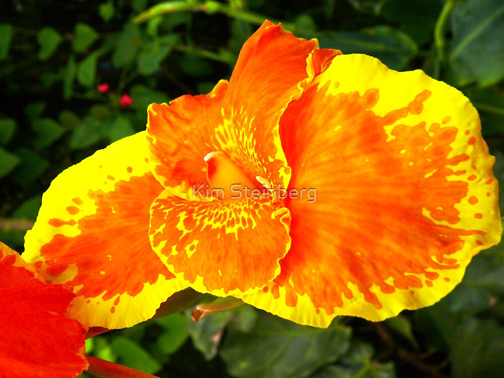 Orange/Yellow flower by Kim Steinberg
