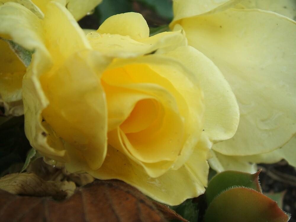 Yellow blush by Jess Mo