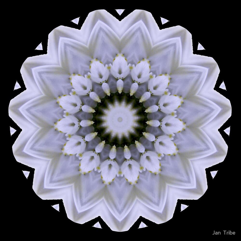 Flower Design by Jan  Tribe