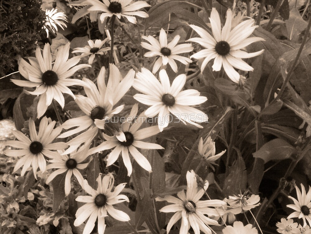A Bunch Of Daisies by sweetmary037691