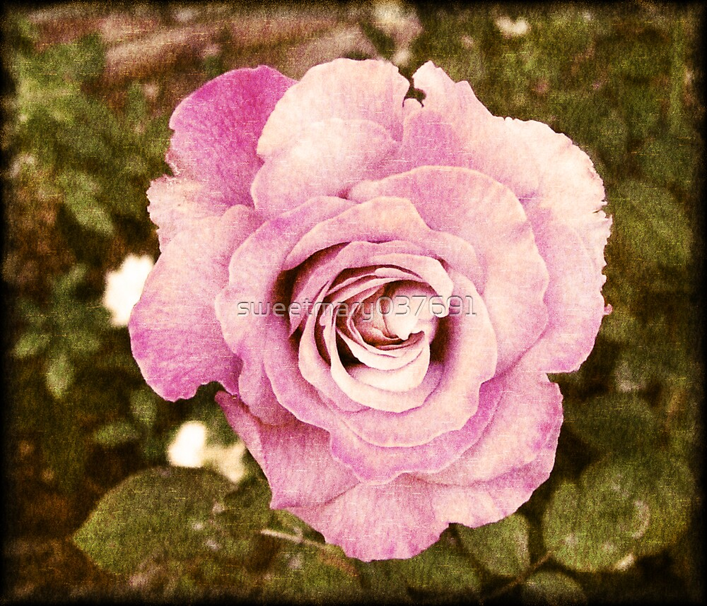 Pretty Pink Rose by sweetmary037691
