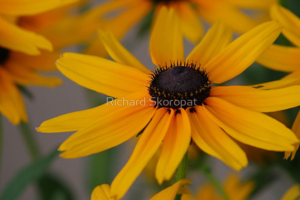 Yellow Flower Bloom by Richard Skoropat