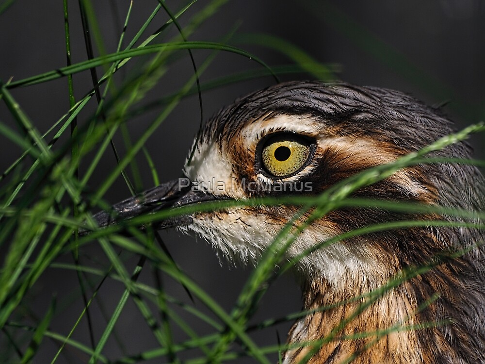 Covert Curlew by Paula McManus