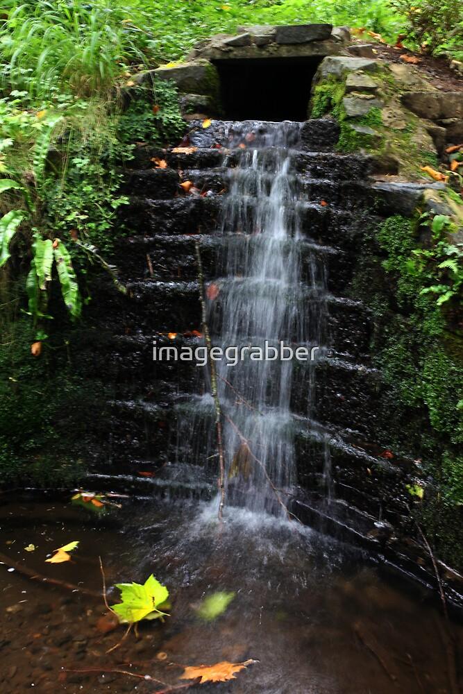 portglenone forest by imagegrabber
