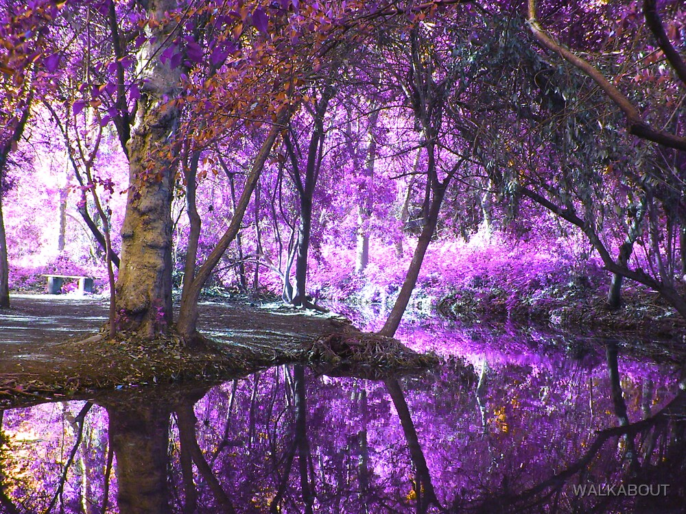 purple woods by WALKABOUT