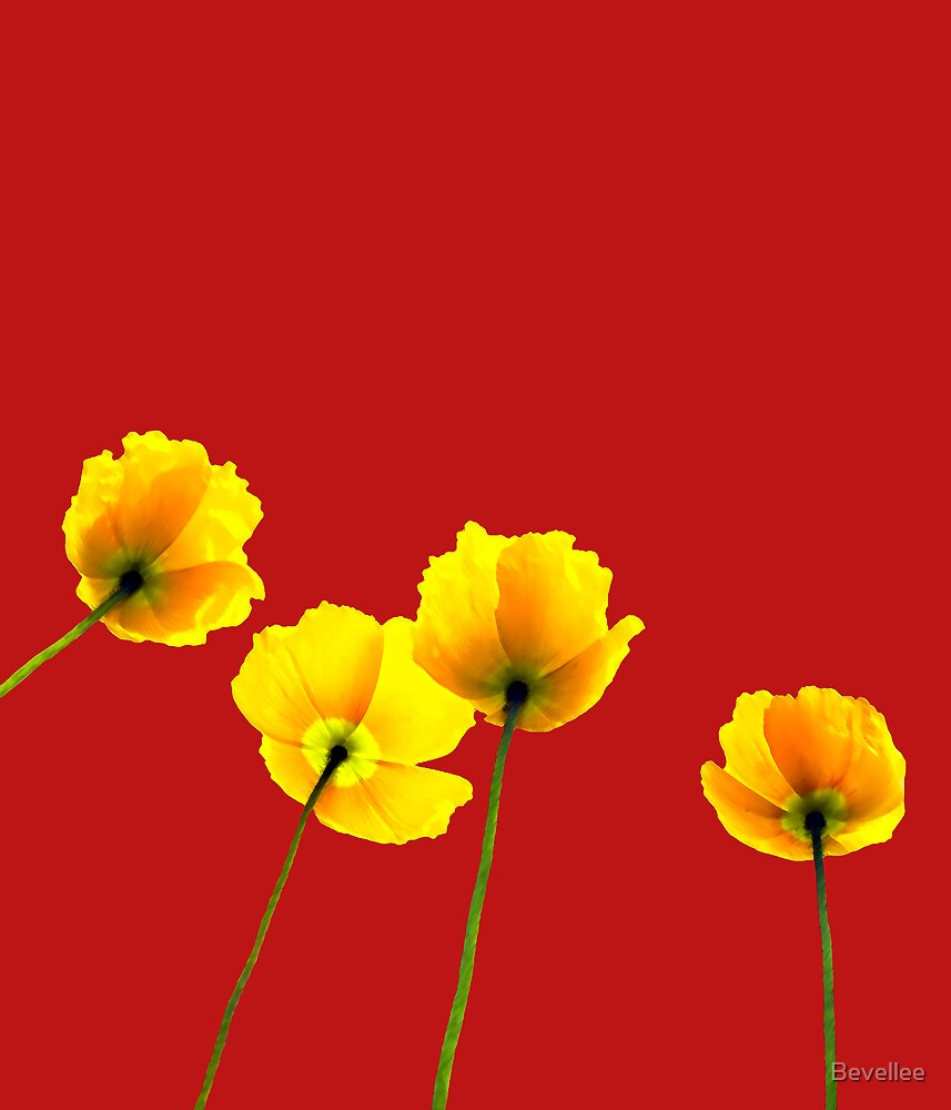 Poppies by Bevellee