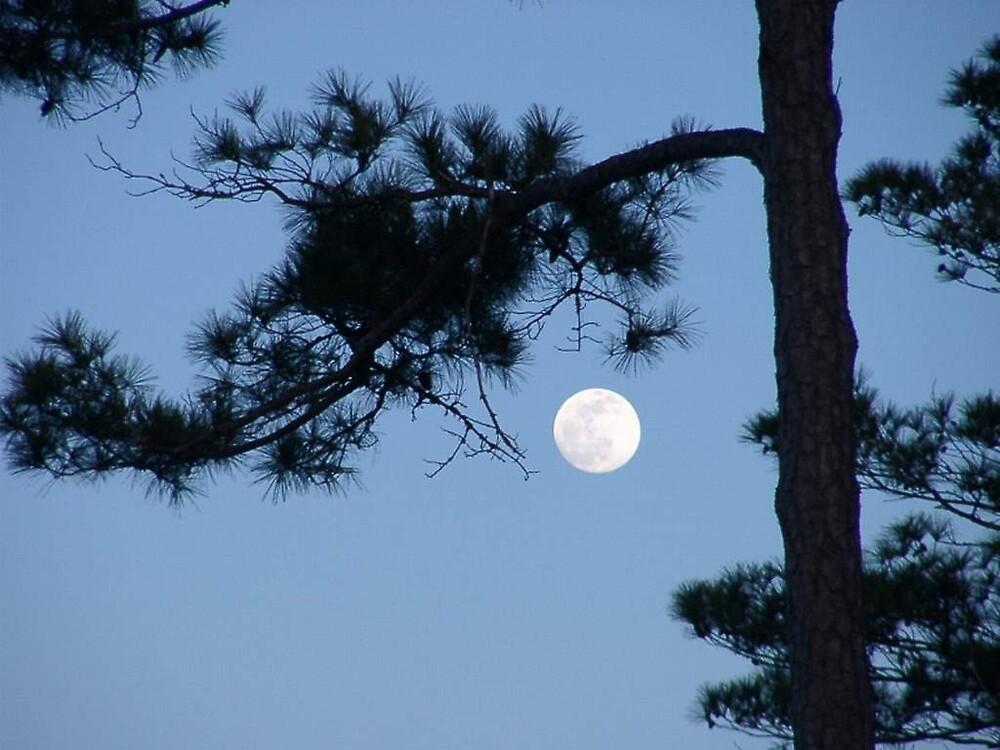 Carolina Moon by jecnc