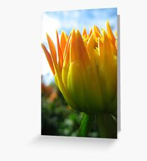Budding Dahlia Greeting Card