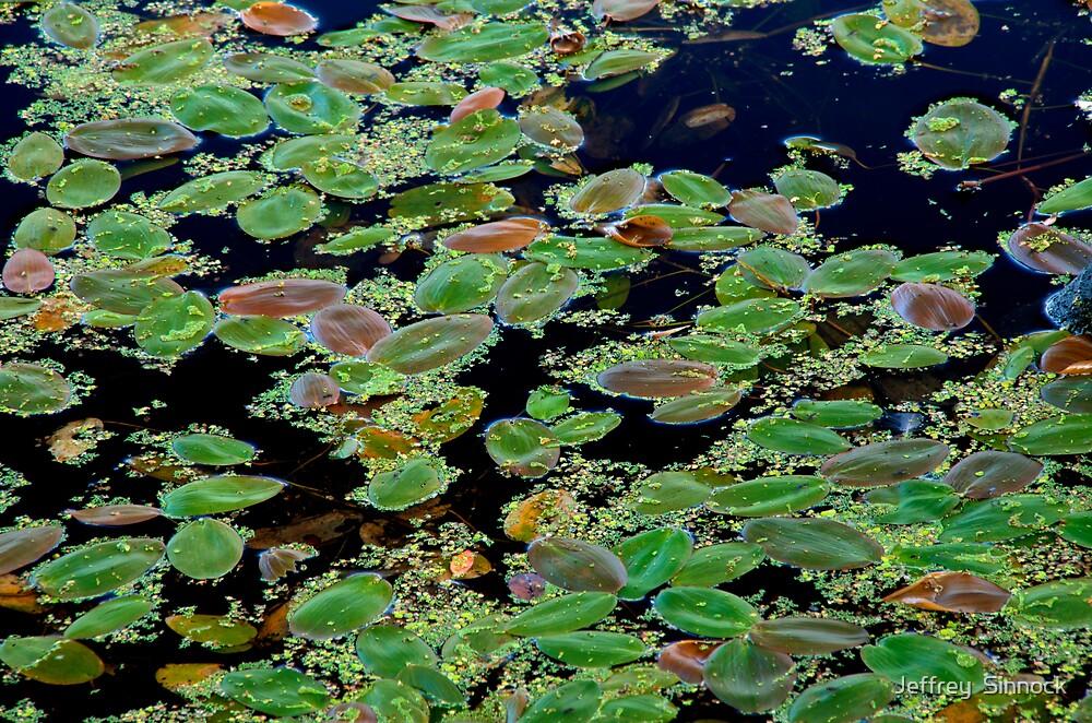Rafts for frogs by Jeffrey  Sinnock